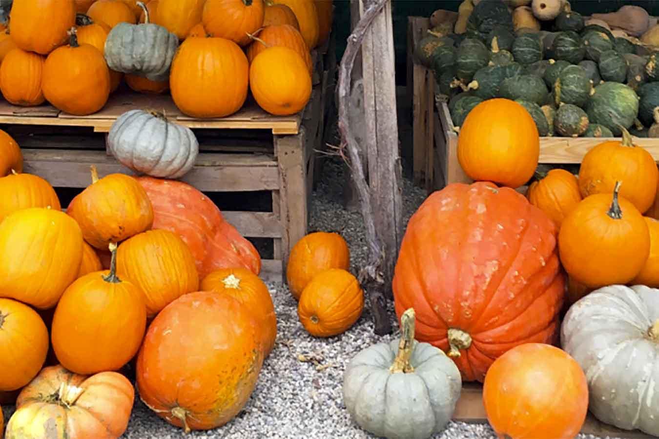 Zucca: ortaggio d'autunno, ricette e curiosità